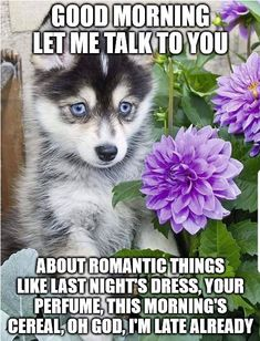 Cute Good Morning Meme, Good Morning My Love, Good Morning Texts, Morning Wish, Morning Message For Him, Morning Kisses, Emoji Pictures, Romantic Things, Halloween Food For Party