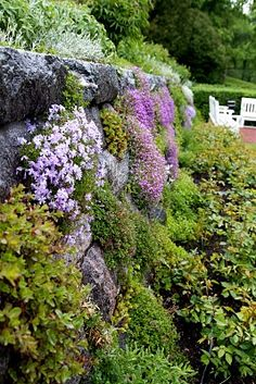 Phlox wall                                                                                                                                                                                 More