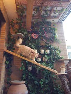 Happy tree for happy cats!
