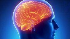 """""""FENILALANINA a moringa tem! Aminoácido utilizado pelo cérebro para produzir a norepinefrina, uma substância química que transmite sinais entre células nervosas do cérebro, promove a vigilância e vitalidade."""""""