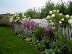 Lavender and white floral border. Harmonia Creative Landscapes & Fine Stonework.