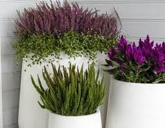 Image result for φθινοπωρινά φυτά jenny