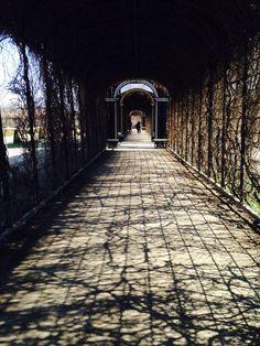 Garten/ Schönbrunn