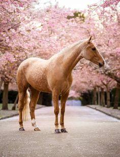 Photo by: CM Photography Horse Addicted - Horses Red/Rosa/Pink BG - Pferde Funny Horses, Cute Horses, Pretty Horses, Horse Love, Beautiful Horses, Animals Beautiful, Horse Photos, Horse Pictures, Pretty Animals