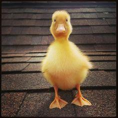 My ducky too cute