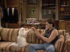 Matt Leblanc boxing a cat