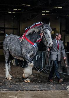 Породистые Лошади, Лошади Breyer, Ломовая Лошадь, Тяжеловозы, Женская Мода, Ковбои, Животные, Краска, Животные