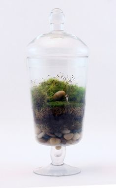 These are the coolest things ever!  Uncharted Territory by Twig Terrarium | twigterrariums