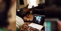 If your loved one's live far away from your home, you probably know that technology can now help bridge the distance. And it does the same for this adorable dog and his friend! Watch this adorable dog Skype with his friend to catch up, like us people use to talk with our loved one's who are living far away! Want to …