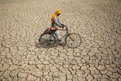 Un agricultor cruza un antiguo campo de arroz devastado por la sequía cerca de Jammu, India (Channi Anand, 2016)
