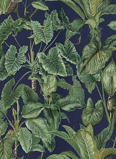 Paradisio Tropical Wallpaper By Erismann Wallcoverings Jungle Wallpaper, Tropical Wallpaper, More Wallpaper, Wall Wallpaper, Pattern Wallpaper, Black Wallpaper, Turquoise Wallpaper, Trees To Plant, Shopping
