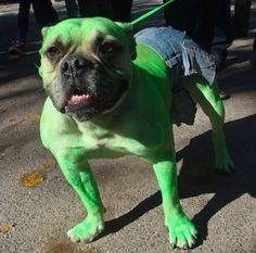 You won't like him when he's angry! Funny dog costumes