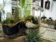 Terrários feitos com vidros de conserva grandes
