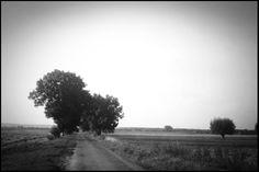 Olympus Trip Olympus Trip, Country Roads