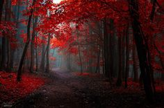 20places which reveal autumn's exquisite beauty