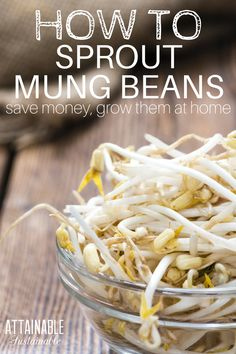 You can grow your own mung bean sprouts at home! Fresh flavor in the middle of winter, for less than the supermarket. Grow your own food! Bean Sprout Recipes, Bean Recipes, Raw Food Recipes, Healthy Recipes, Healthy Foods, Bean Sprouts Growing, Growing Beans, Growing Microgreens, Sprouting Seeds