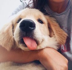 That face! Oh golden retriever puppies are adorable! Animals And Pets, Baby Animals, Funny Animals, Cute Animals, Jungle Animals, Animals Beautiful, Cute Puppies, Cute Dogs, Dogs And Puppies