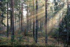 Maria Hemming nappasi lehtokuvalla voiton Minun metsäni–