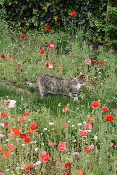 Poppies Galore – The Yvestown Blog