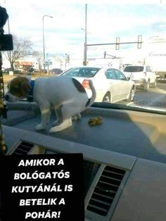 Humor, Dogs, Animals, Animales, Animaux, Humour, Pet Dogs, Funny Photos, Doggies