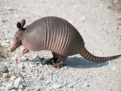 What happens when a telecom company looks to the armadillo and other critters for packaging innovation?