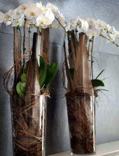 Orchideen im Glas