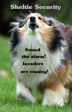 Sound the alarm!