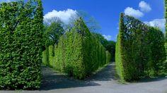 Schoenbrunn Garden Wander, Country Roads, Gardens, Garden, Garden Types, Yards, Formal Gardens