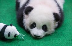 Paris, presidents and pandas: Wednesday's best photos