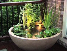 Container Water Garden - with light and recirc fount