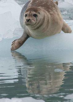 Prince William Sound (Alaska, United States): Address, Tickets & Tours, Body of Water Reviews - TripAdvisor