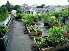 Roof top garden.