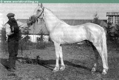 Orlov stallion Kronprints (b. 1907)