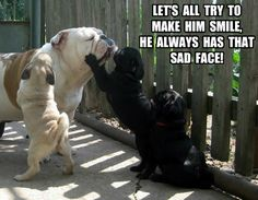 Funny Pug Dog Meme: Pug Puppies vs Bulldog Part 1
