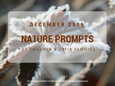 Noticing Nature Nature Prompts - December 2016