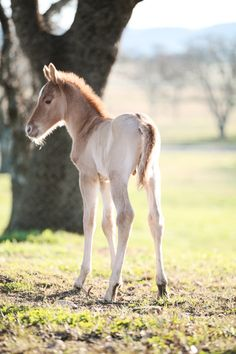 2 day old foal