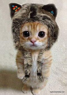 Kết quả hình ảnh cho mèo con dễ thương nhất thế giới