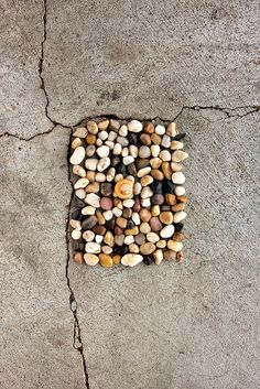 Rocks and one shell