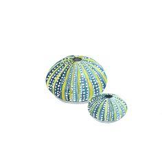 Sea Urchin Shell Watercolor Print, Nautical Home Decor, Beach Decor, Seashell Beach Shell, Watercolor Seahorse, Watercolor Print Price 25$