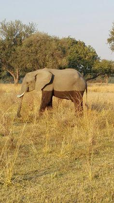 South Luangwa N.P., Zambia, 2017