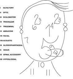 cranial nerves cheat sheet - Google Search