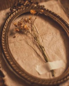 Cream Aesthetic, Gold Aesthetic, Classy Aesthetic, Aesthetic Colors, Flower Aesthetic, Aesthetic Collage, Aesthetic Vintage, Aesthetic Photo, Aesthetic Pictures