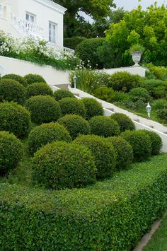 A once steeply sloping site overlooking False Bay and the Hottentots Holland Mountains has been transformed into a manicured, terraced garden that makes as much Pergola Lighting, Garden Types, Contemporary Garden, Public Garden, White Gardens, Patio Roof, Terrace Garden, Garden Inspiration, Garden Ideas