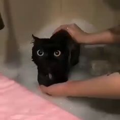 Kitty getting a bath - he looks like Toothless - Katzen - animals Funny Animal Videos, Cute Funny Animals, Cute Baby Animals, Animals And Pets, Cute Cats, Funny Cats, Funny Looking Animals, I Love Cats, Crazy Cats