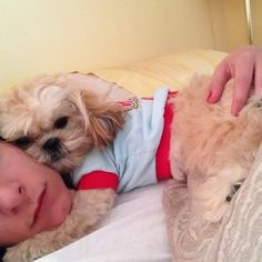 This master of cuddle. | 27 Adorable Shih Tzus Who Will Make Your Day Better