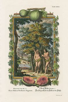 Scheuchzer Physica Sacra Tab 29: Ficus Folium Nuditatis Tegmen. Adam & Eve and the Forbidden Fruit.