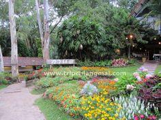 สวนอาหาร กาแล...อ่างเกษตร หลังม.ช http://www.tripchiangmai.com/chiangmaiboard/index.php/topic,5958.0.html#.UqFB_NJdXnM