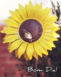 Good Morning Sunshine, Good Morning Wishes, Good Night Hug, Rose Flower Wallpaper, Good Morning Animation, Beautiful Gif, Glitter Graphics, Top Videos, Dragon Ball Gt
