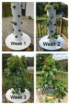 Grow vegetables, fruits, herbs and flowers indoors or outdoors. Tower garden uses aeroponics in a vertical garden so you can grow your own produce quickly and easily—no green thumb required. Growing Plants, Growing Vegetables, Organic Vegetables, Hydroponic Gardening, Container Gardening, Juice Plus Tower Garden, Garden Tower Diy, Magic Garden, Vertical Farming