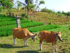 Bali - Colonie de Vacances avec le CEI. #colonie #cei #bali